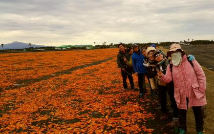 05-jeju-olle-guided-walk-2017-02-03